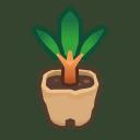 cedar sapling(10)