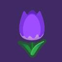 purple tulips(10)
