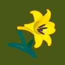 yellow lilies(10)